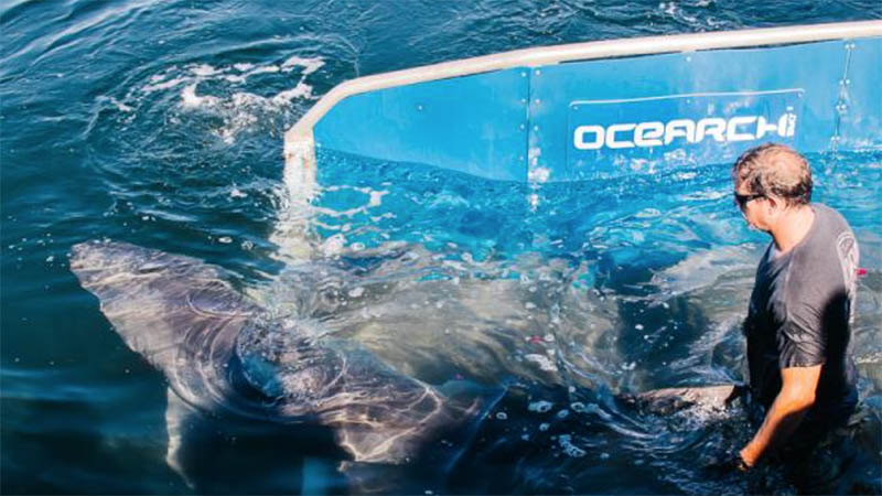 Tagged Sharks Oscar And George Ping Off Outer Banks Coast The Coastland Times The Coastland Times
